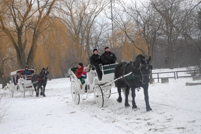 Horse and Carriage rides at Palmer Parks WinterFest Feb 2013