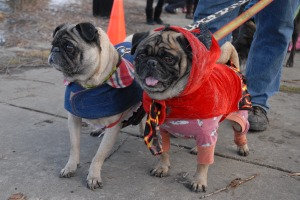 Doggie Parade_0121